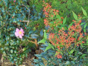 山茶花と南天